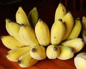 https://pictures.thailandplant.com/~images/bulb/2012/Dwarf_Nam_Wa_banana_3.jpg