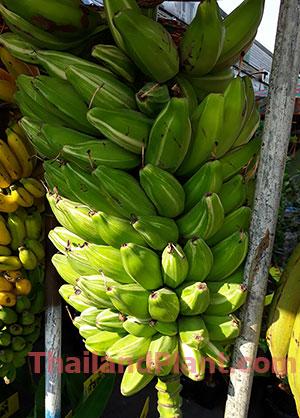 https://pictures.thailandplant.com/~images/bulb/2020/small-Kluai-TaNee-variegated-2.jpg